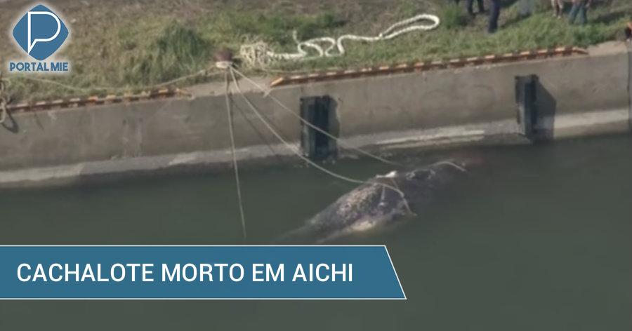 &nbspCachalote é encontrado morto em Aichi