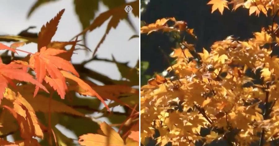 &nbspColorido de outono imperdível em Takayama com iluminação especial