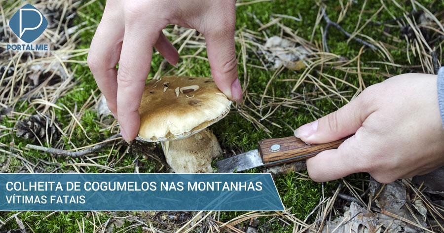 &nbspAumenta o número de acidentes fatais relacionados à colheita de cogumelos