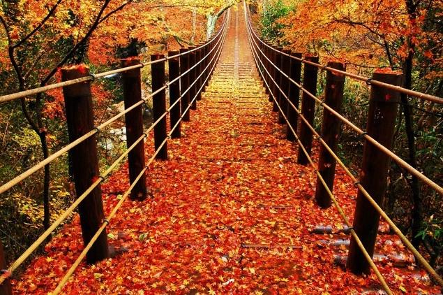 &nbspLocais em Ibaraki para apreciar a beleza do outono