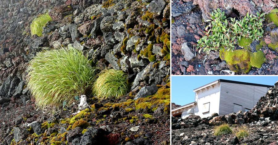 &nbspEcossistema no topo do Monte Fuji muda por causa de temperaturas mais quentes