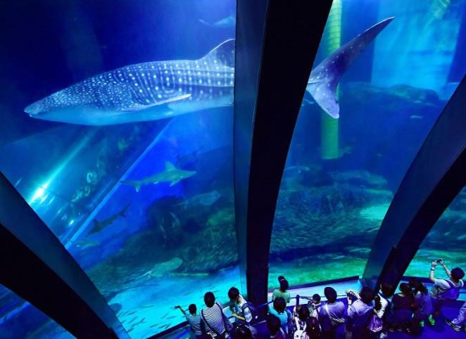 &nbspTubarão-baleia está em exibição no aquário de Yokohama
