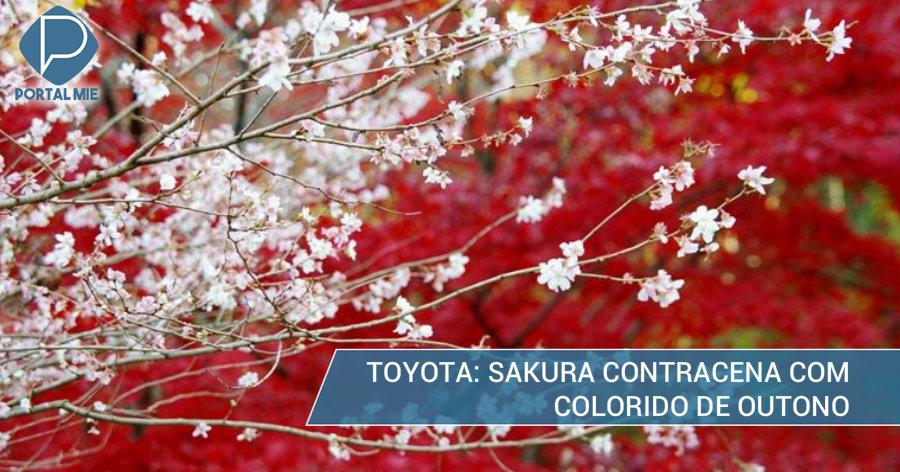 &nbspO encontro das cores do outono com sakura em Toyota