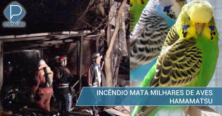 &nbspIncêndio mata 4 mil pássaros em Hamamatsu