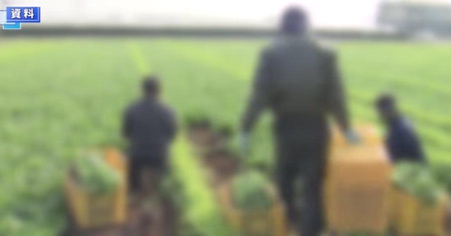 &nbspAprovada a revisão da lei que amplia aceitação de trabalhadores estrangeiros