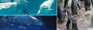 aquario-de-shimane-destaque-310x100.jpg
