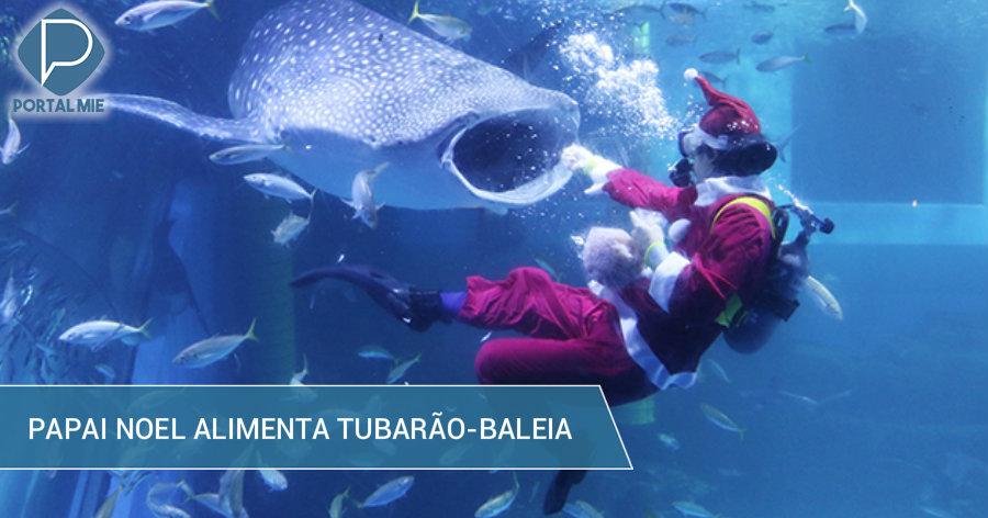&nbspAtração no aquário: Papai Noel alimenta tubarão-baleia