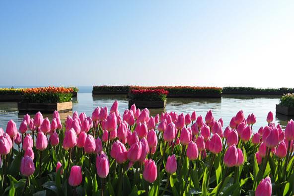&nbspTulipas de inverno no Parque Hitachi Seaside em Ibaraki