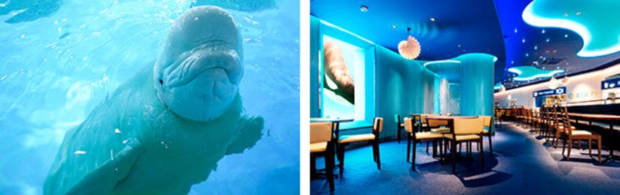 &nbspMostrando o passaporte tem 50% de desconto no aquário em Chiba