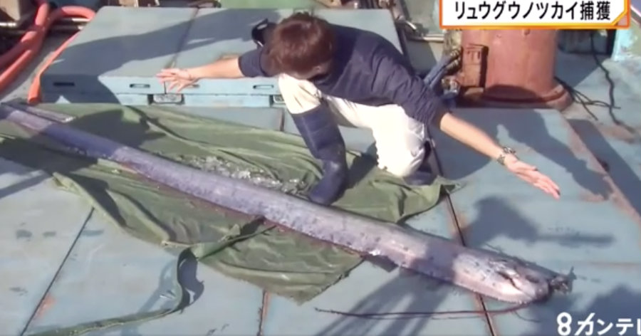 &nbspMisterioso peixe das profundezas é pescado em Quioto