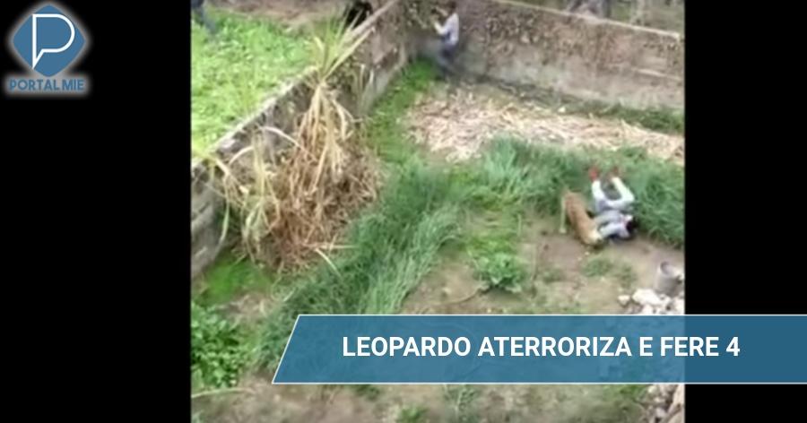 &nbspLeopardo ataca furiosamente pessoas da aldeia e fere 4