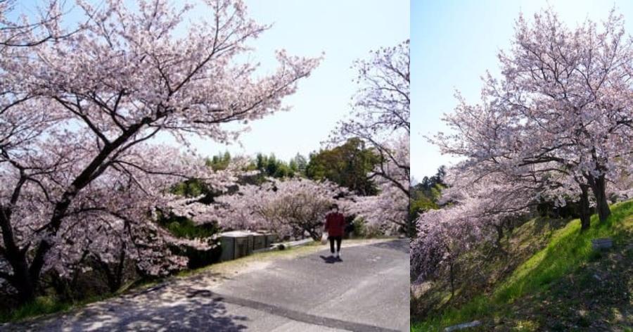 &nbsp3 points imperdíveis de sakura em Hiroshima